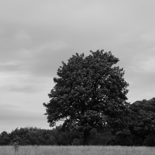 """""""Tree from the distance"""" stock image"""