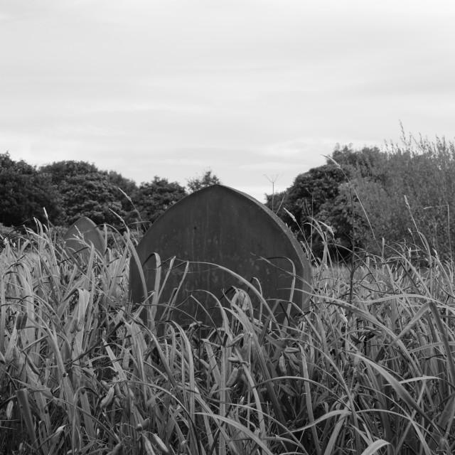 """Single gravestone"" stock image"