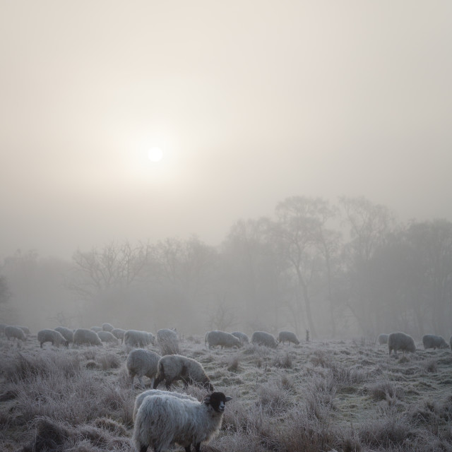 """""""Freezing Cold"""" stock image"""