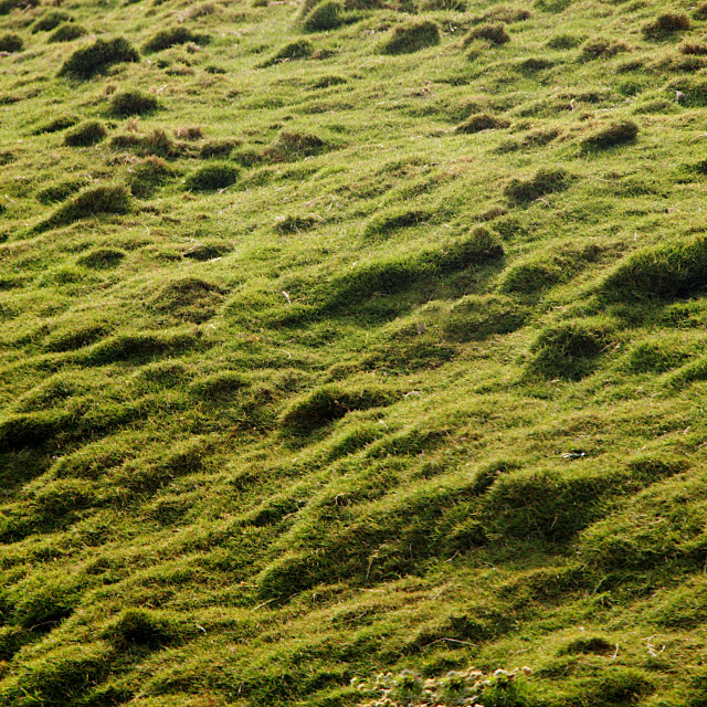 """""""Grass Bed on Rough Land"""" stock image"""