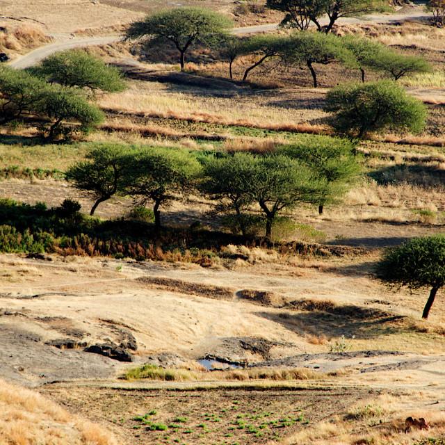 """Trees cape at Lenhadri"" stock image"