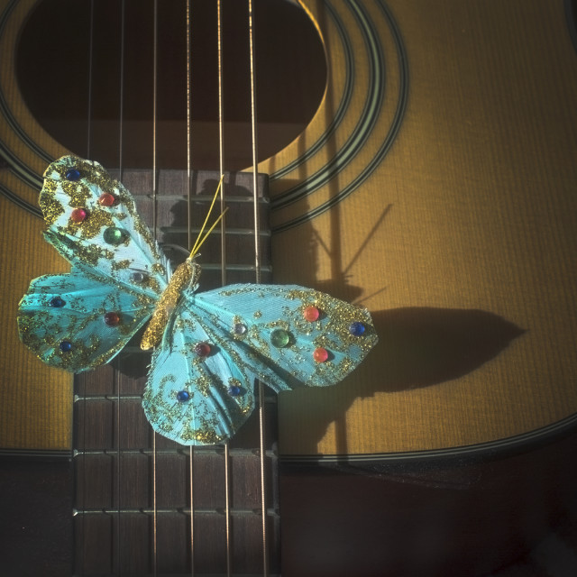 """Turquoise butterfly on strings of acoustic guitar,"" stock image"