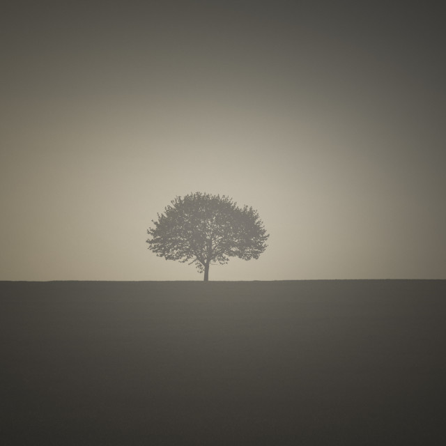 """Vintage image with a single tree"" stock image"