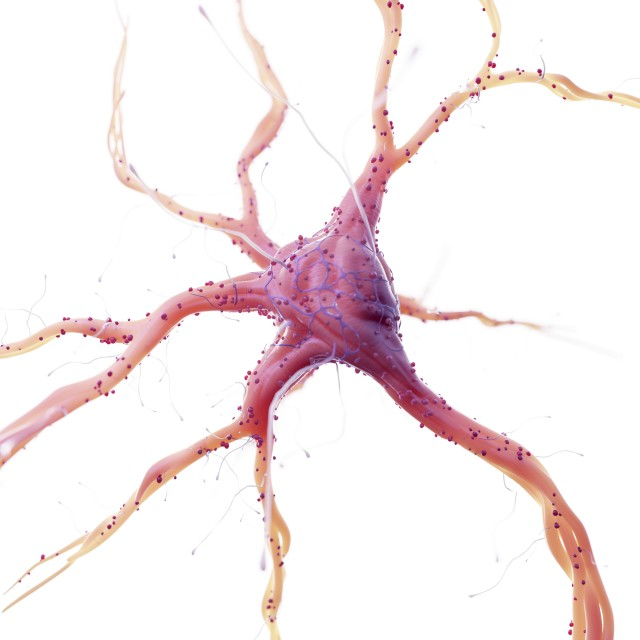 """Illustration of a human nerve cell"" stock image"