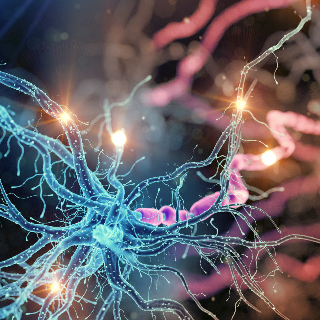 """""""Illustration of an active human nerve cell"""" stock image"""