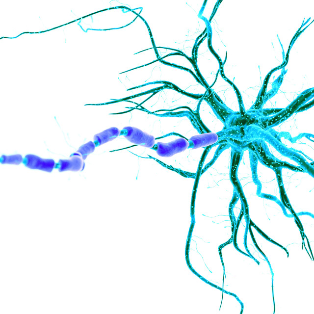"""""""Illustration of a human nerve cell"""" stock image"""