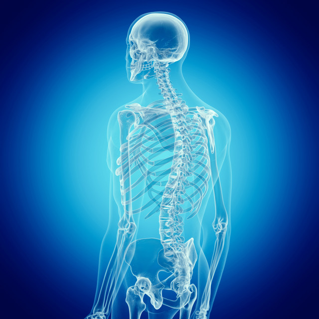 """""""Illustration of the human spine"""" stock image"""