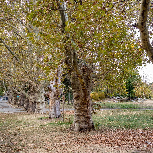 """Almost empty garden in downtown Sofia, Bulgaria"" stock image"