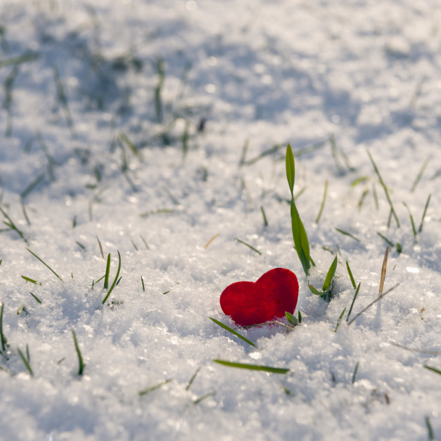 """Red heart shape stuck in fluffy snow"" stock image"