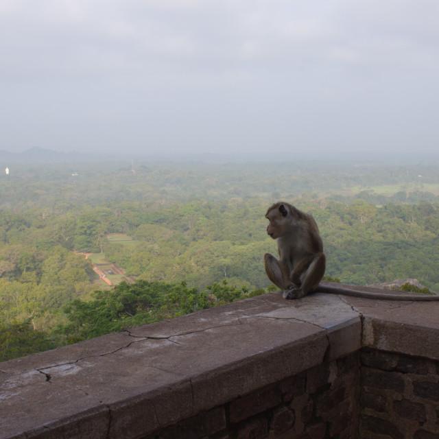 """Monkey at Lion Rock"" stock image"
