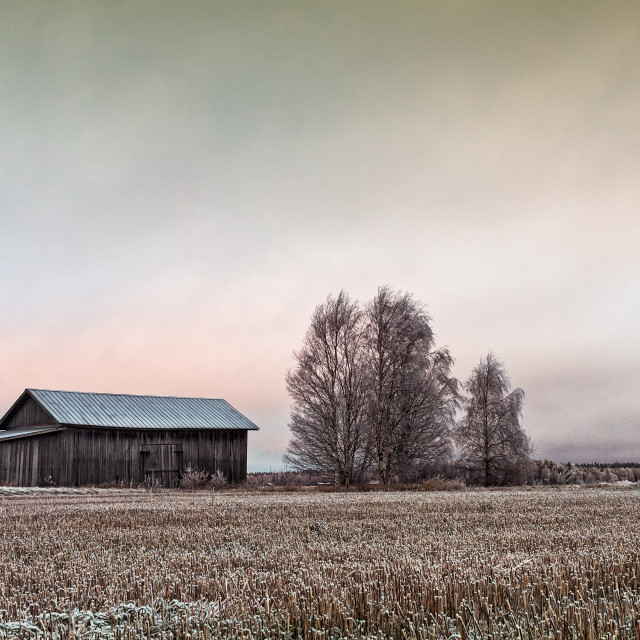 """""""Old Barn House And Bare Trees"""" stock image"""