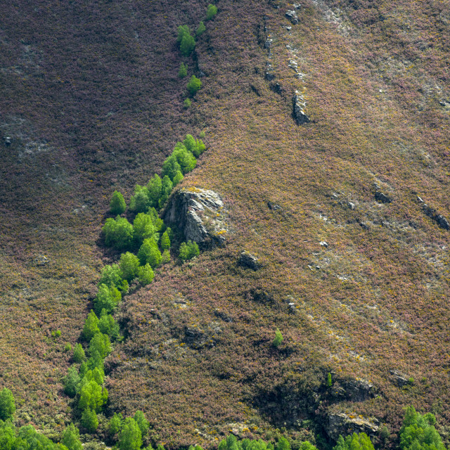 """""""Birches colonizing the deforested mountains"""" stock image"""