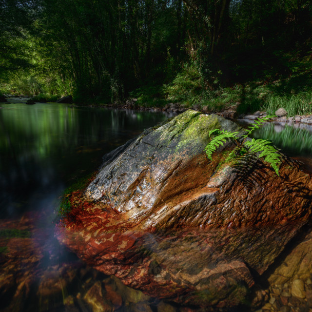 """""""Solitary fern in a red rock in the green waters of a river"""" stock image"""