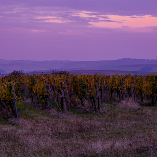 """""""Sunrise over the vineyards of South Moravia"""" stock image"""