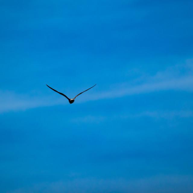 """Silhouette of black bird flying away, sky minimal"" stock image"