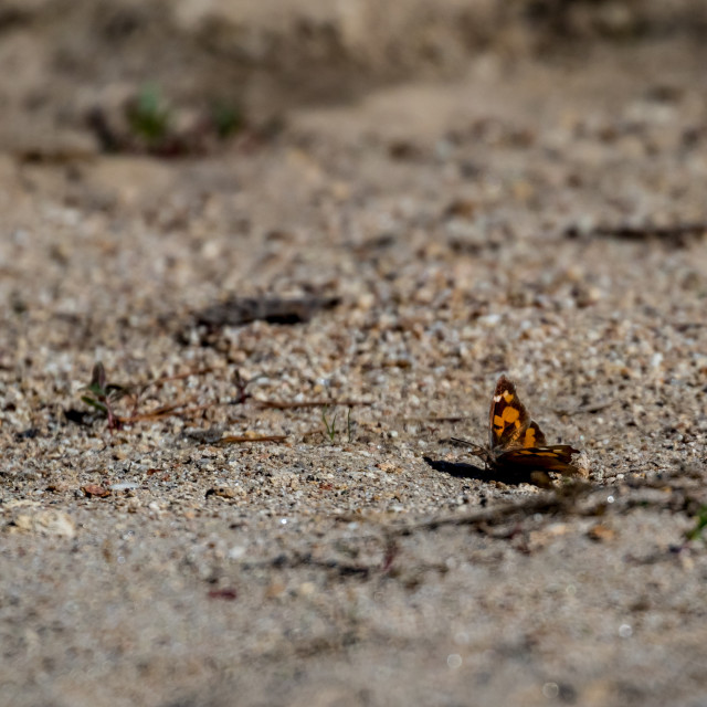 """""""Brown yellow butterfly sitting on sandy ground"""" stock image"""