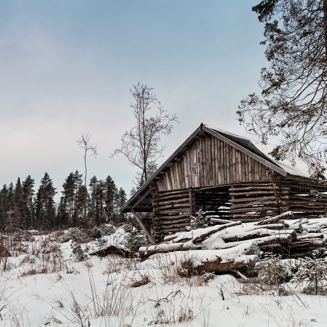 """""""Old Shed By The Forest"""" stock image"""