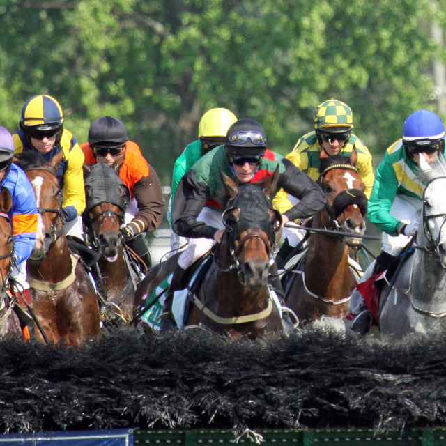 """""""Steeplechase Horses Approach Hurdle Panorama"""" stock image"""