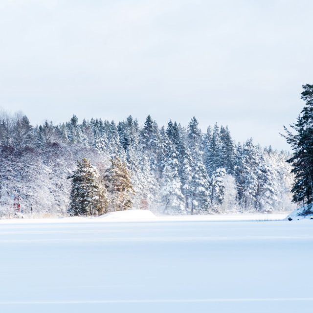 """Snowy forest"" stock image"