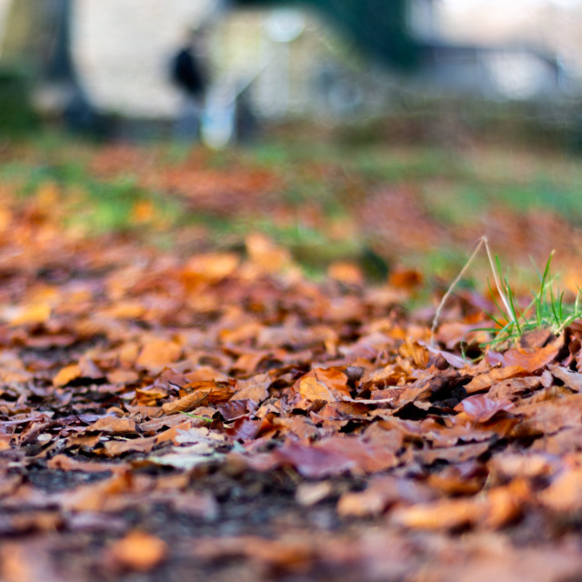 """Wet Autumn Leaves"" stock image"