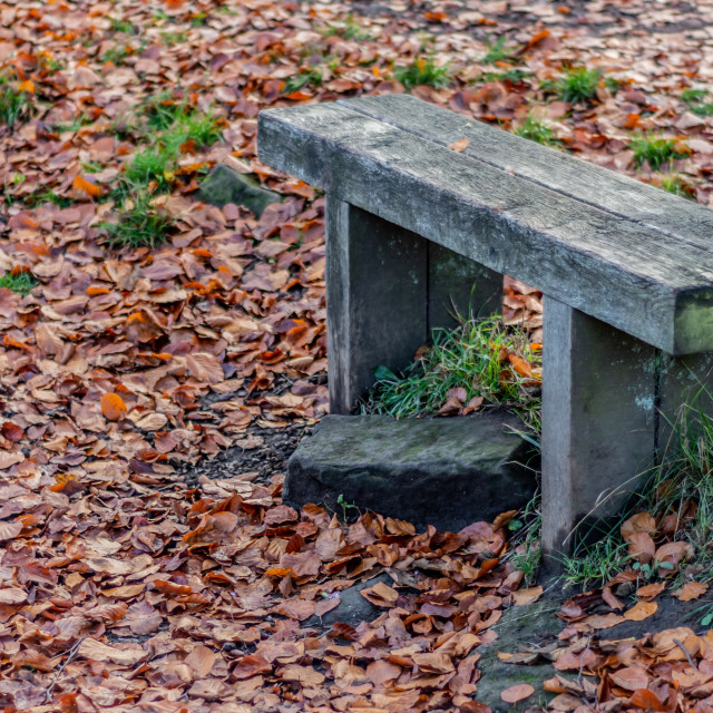 """Wooden Autumn Bench"" stock image"