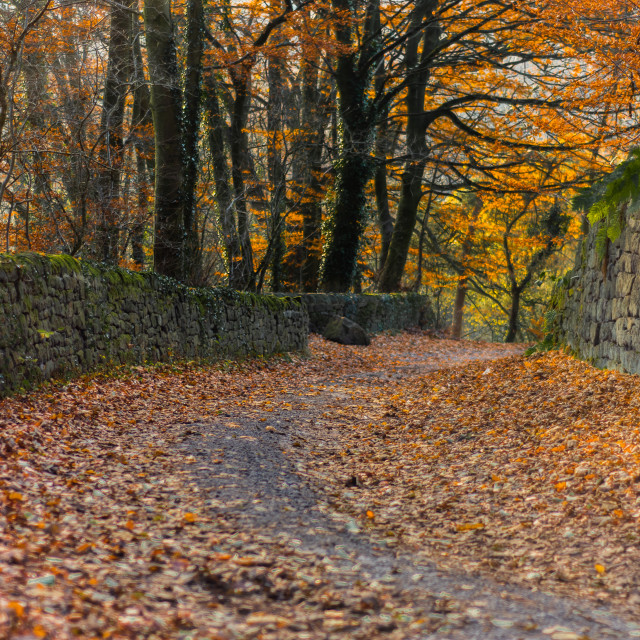 """Leaf covered road"" stock image"