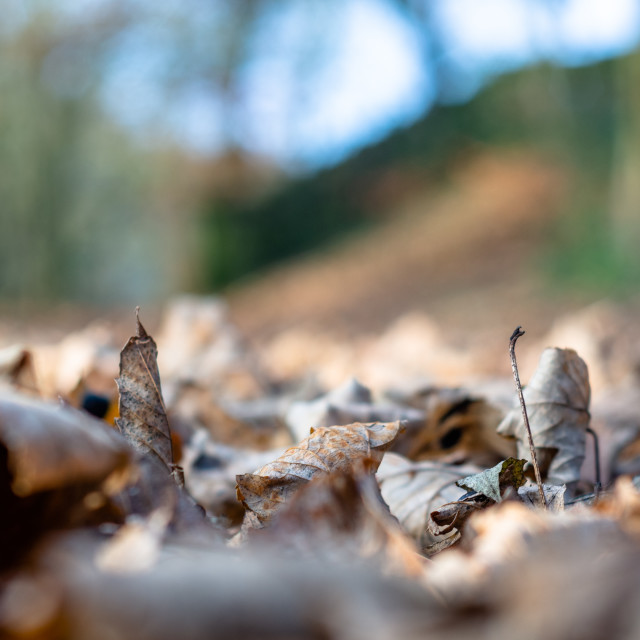 """Dried leaves on the ground"" stock image"