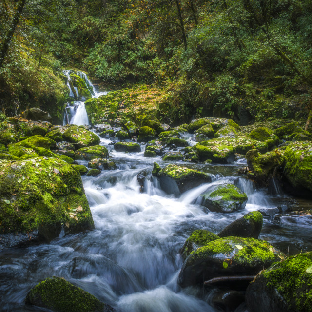 """Waterfall in the Oregon forest"" stock image"
