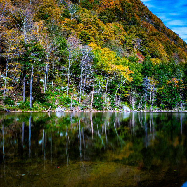 """""""Fall Leaves on Pond"""" stock image"""