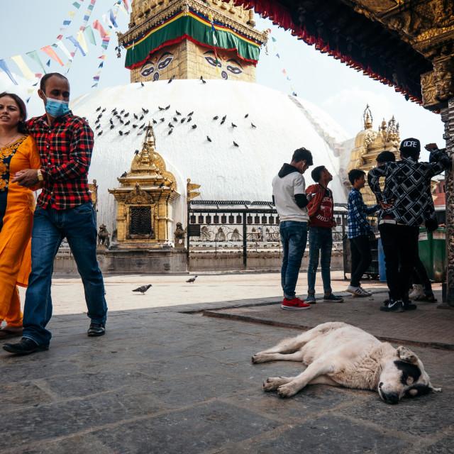 """Dog Sleeping at Stupa."" stock image"