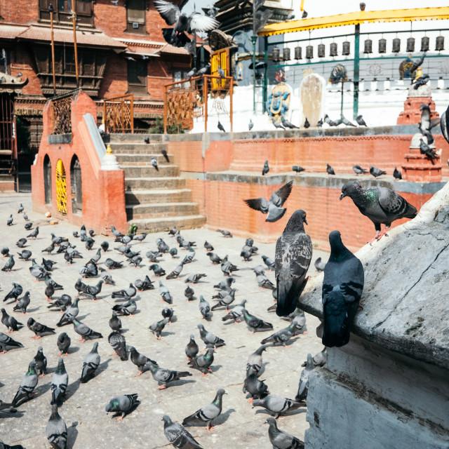 """""""Stupa Pigeons"""" stock image"""