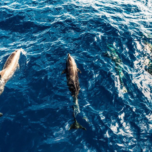 """""""Dolphins"""" stock image"""