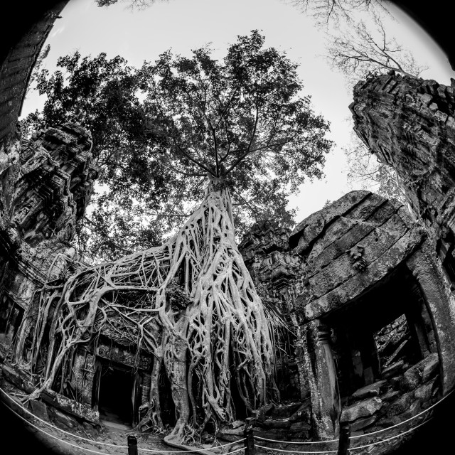 """Ultra Wide Ta Prohm"" stock image"