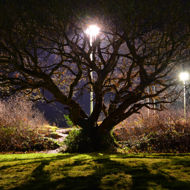 """Backlit Tree and Path at Night"" stock image"