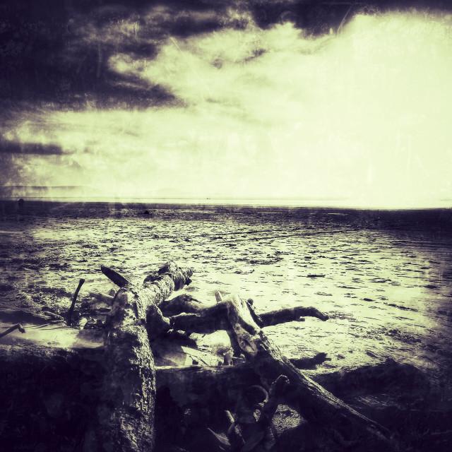 """""""Driftwood grunge"""" stock image"""