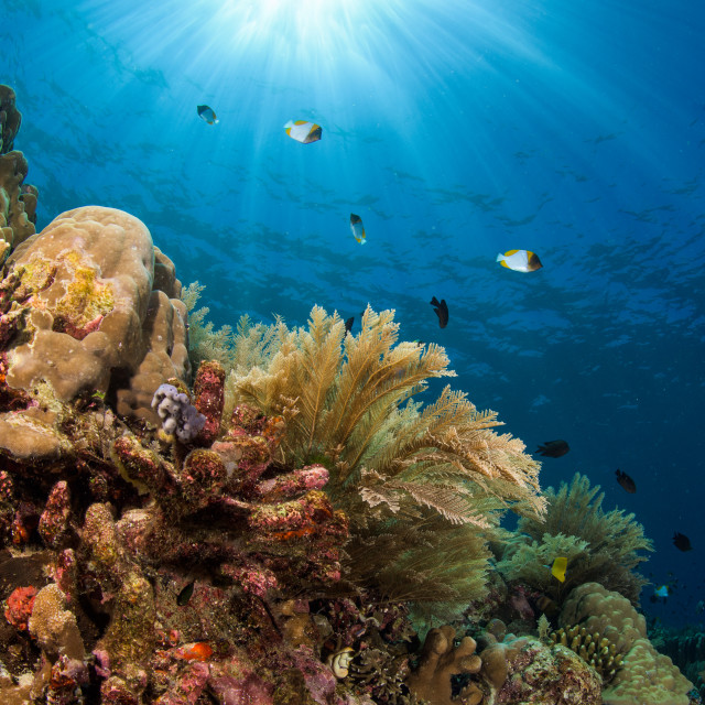 """""""Coral reef in Manado, Indonesia"""" stock image"""