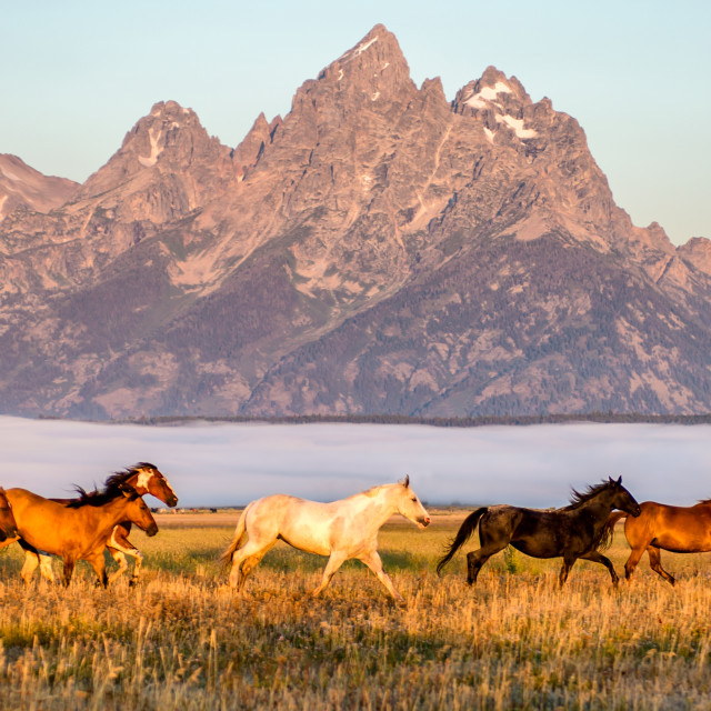 """Morning Roundup at Triangle X Ranch"" stock image"