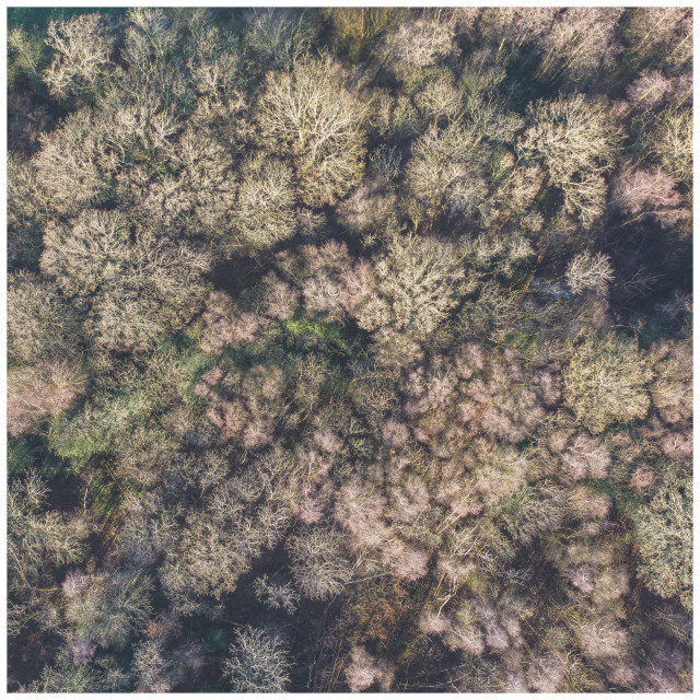 """Rother Wood from Above"" stock image"