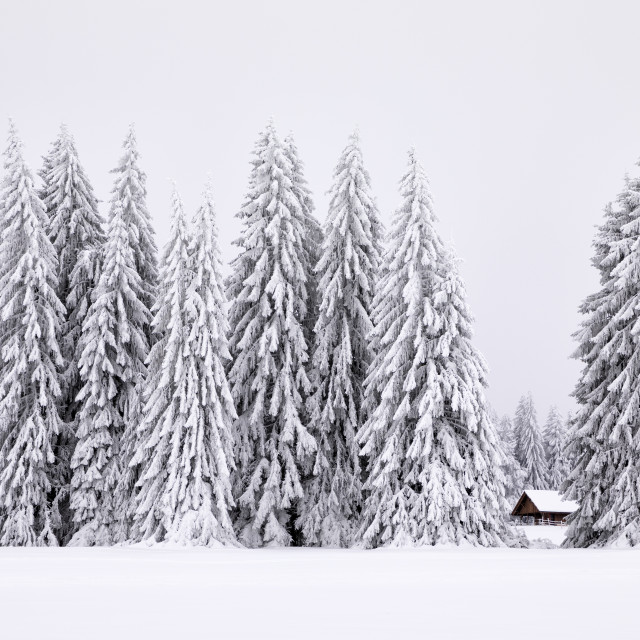 """Lost in Winter"" stock image"