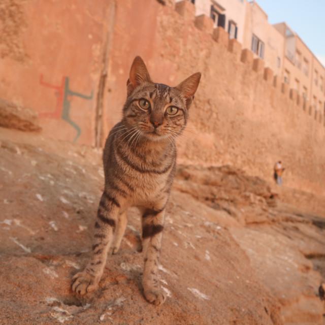 """""""Cat in the Medina"""" stock image"""