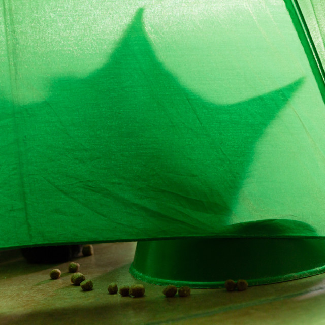 """""""shadow of a cat on a green background"""" stock image"""