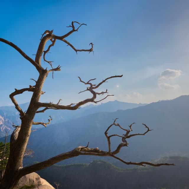 """Tree in Seoraksan National Park, South Korea"" stock image"