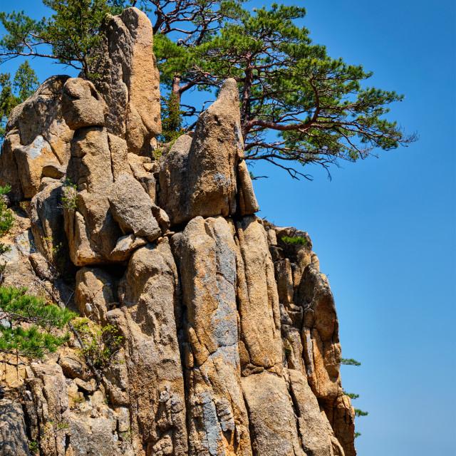 """Pine tree and rock cliff , Seoraksan National Park, South Korea"" stock image"