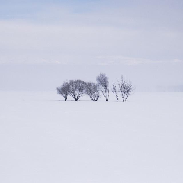 """Alone Trees"" stock image"