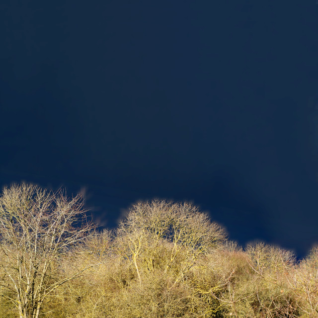 """""""Sunlit trees against a stormy sky"""" stock image"""