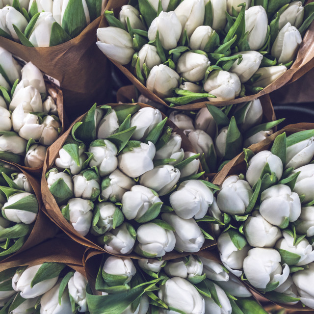"""White tulip bouquets in paper bags"" stock image"