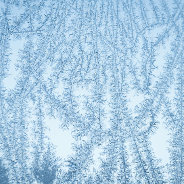 """Frost flake patterns on a window in December"" stock image"