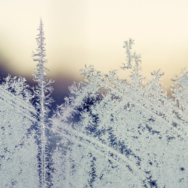 """Morning frost on a window in the sunrise"" stock image"