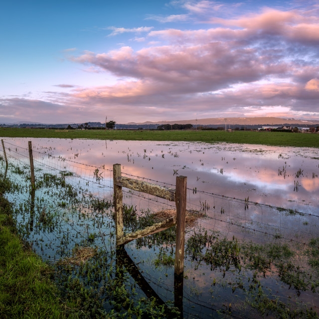 """Sunset Reflections in a Flooded Pasture, Northern California, USA"" stock image"