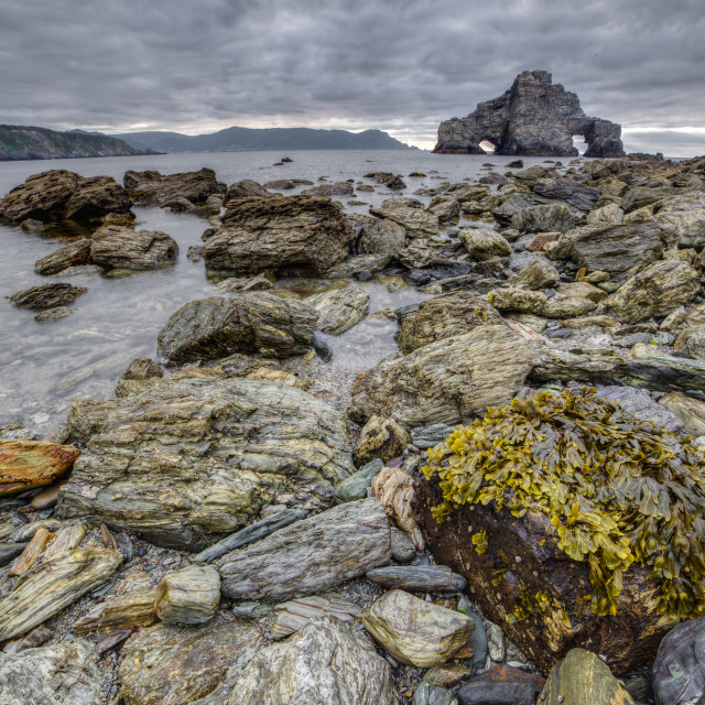 """low tide, algae and rocks"" stock image"